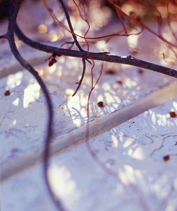branches_purple.1